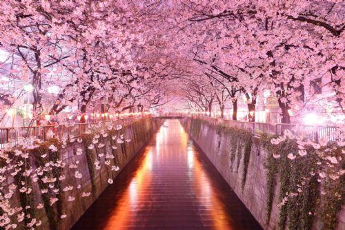 http://www.ggcogic.org/uploads/CherryBlossomLane.jpg